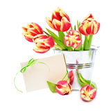 Red stripy tulips in shiny tin backet and blank greeting card on Stock Photography