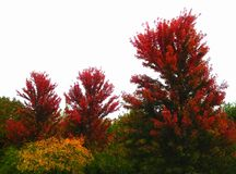 Fall In Red royalty free stock photos