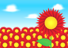 Red sun flower on blue sky background Royalty Free Stock Photo