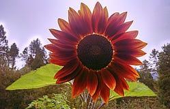 Red sun. Flower garden tree outdoor sky Stock Photo