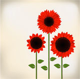 Red sunflower. Three red sunflowers paper card Royalty Free Stock Photo