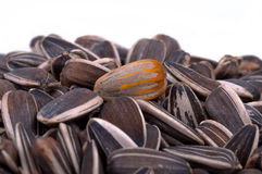 Red sunflower seed Royalty Free Stock Photos