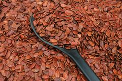 Red sunflower seeds in a wooden spoon stock photo