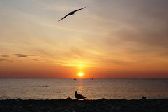 Red sunrise at sea with birds silhouette. Morning at red sunrise at sea shore with birds silhouette. Bright sun over horizon. Flying bird at background cloudy stock photos