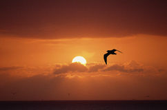 Red sunset. Seascape with sun, red sky, clouds and birds Stock Images