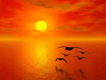 Red sunset. And flying birds (more in portfolio Royalty Free Stock Image