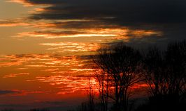 Red sunset. Silhouette of trees on red sunset background Stock Image