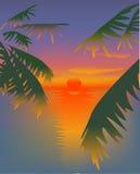 Red sunset Stock Photos