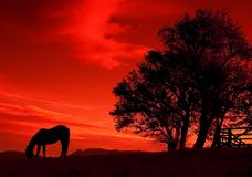 Red sunset. Horse and tree on red sunset Royalty Free Stock Photos