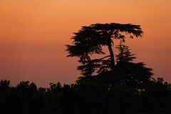 Sunset behind treesin Provins in France. Red sunset behind the blach tree on a summer evening in Provins, France Stock Image