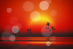 Red sunset blurred Stock Image