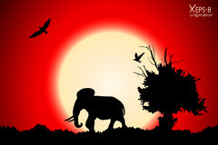 Red sunset in the jungle with old tree, birds and elephant Stock Images