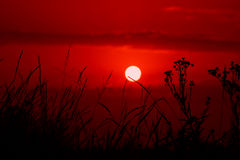 Red sunset over meadow silhouette grass Royalty Free Stock Photos