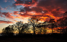 Red sunset over the trees. Blue sky and red sunset over the dark trees Stock Photos