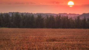 Red sunset over a wheatfield Royalty Free Stock Images