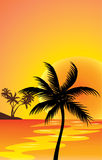 Red sunset and palm Royalty Free Stock Images