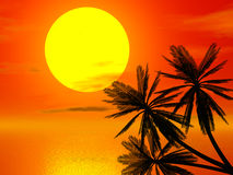Red sunset and palm Stock Photography
