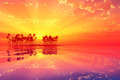 Red sunset rays Royalty Free Stock Photos
