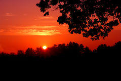 Red sunset silhouette. A red sunset with trees silhouetted against the sky Royalty Free Stock Photos