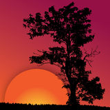 Red sunset with the silhouette of the tree. Red sunset with the black silhouette of the tree on the red background Royalty Free Stock Photo