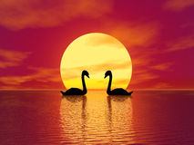 Red Sunset and swans vector illustration