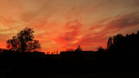 Sunset and red sky over trees Royalty Free Stock Photos
