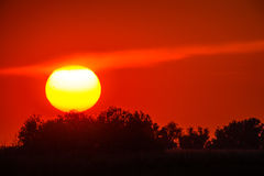 Red sunset through vegetation with a large sun. Large sun through vegetation at red sunset Royalty Free Stock Image