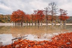 Red swamp cypresses, autumn landscape with lake. In Sukko, Anapa, Russia Royalty Free Stock Photos