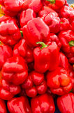 Red sweet bell peppers Stock Image