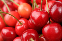 Red Sweet Cherries Stock Image