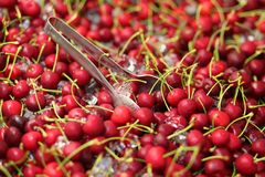 Red sweet cherries on ice Royalty Free Stock Photos
