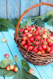Red sweet cherries Stock Images