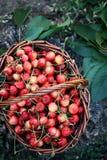 Red sweet cherries, top view Stock Photo