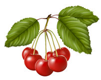 Red sweet cherry with leaves. Vector illustration. Red sweet cherry with leaves Royalty Free Stock Photo
