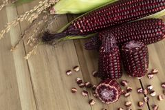 Red sweet corn  on wood background, Siam Ruby Queen corn royalty free stock image