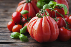 Red sweet fresh tomato and basil Royalty Free Stock Image