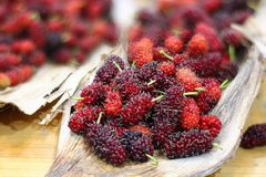 Red sweet mulberry fruits  Morus rubra royalty free stock images