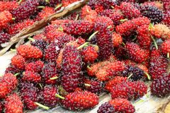 Red sweet mulberry fruits  Morus rubra royalty free stock photo