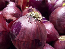 Red Sweet Onions Stock Images