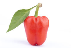Red sweet pepper with leaf Royalty Free Stock Photo
