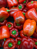 Red sweet pepper Royalty Free Stock Images
