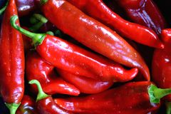 Red sweet peppers. Red delicious sweet organic peppers royalty free stock photography