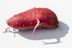 A Red Sweet Potato stock photography