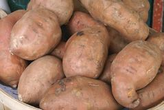 Red sweet potatoes Stock Images