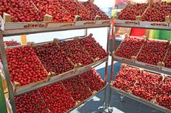 Red, sweet, ripe, beautiful cherries at the village fair. In the village of Ritopek, Serbia Stock Photography