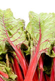 Red Swiss Chard Royalty Free Stock Photos