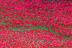 Red symbolic ceramic poppies - Tower of London Stock Image