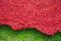 Red symbolic ceramic poppies - Tower of London Stock Images