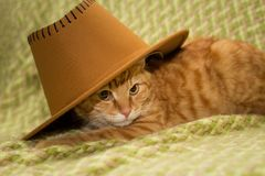 Red cat in a cowboy hat on a green veil. A red tabby cat in a cowboy hat lies on a green veil. He looks at the interlocutor sternly and discontentedly Royalty Free Stock Photos