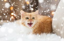 Red tabby cat at home on christmas. Pets, christmas, winter and hygge concept - red tabby cat mewing on sheepskin at home over snow stock images